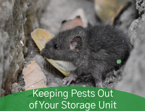 Keeping Pests Out of Your Storage Unit